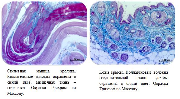 Мышцы и кожа