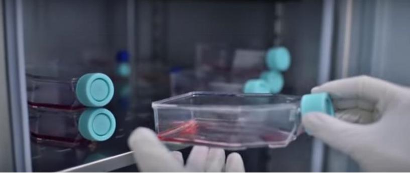 Работа с клетками